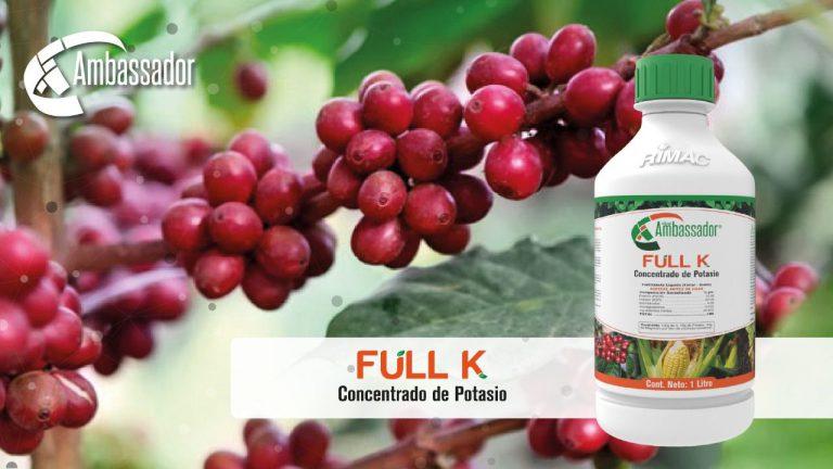 Ambassador Ful K café 2