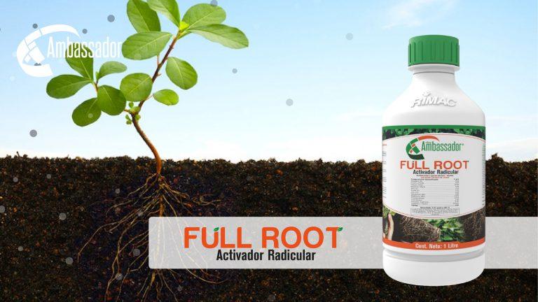 Full Root 2