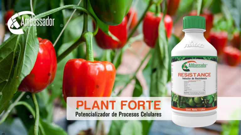 Plant Forte error 2