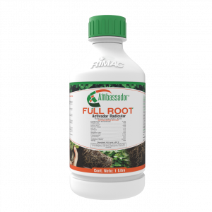 Full Root